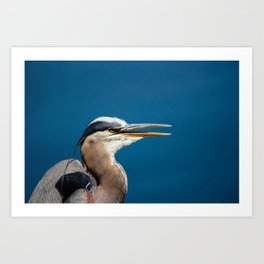 Great blue heron portrait Art Print
