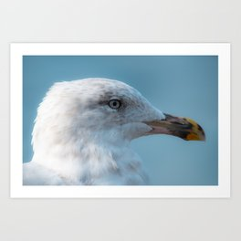 Shorebird in close-up Art Print