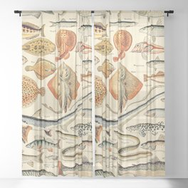 Vintage Fishing Diagram // Poissons by Adolphe Millot XL 19th Century Science Textbook Artwork Sheer Curtain