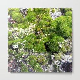 Moss Anemone 2 Metal Print