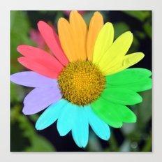 colorful daisy Canvas Print