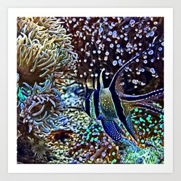 Reef and Fish Art Print