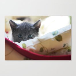 Shadow the Cat Canvas Print