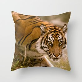 Tiger Stalking Throw Pillow