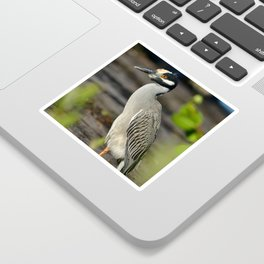 Yellow Crown Night Heron Sticker