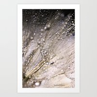 Giant Dandelion 01 Art Print
