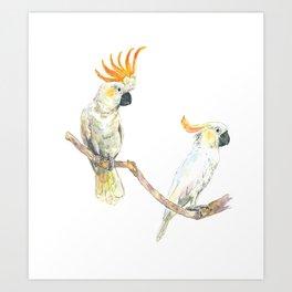 A couple of cockatoo Art Print