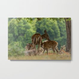 Bonding Dear Metal Print