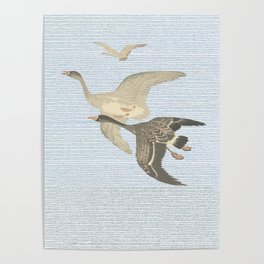 Nothing to match the flight of wild birds flying Poster