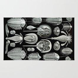 Trilobites and Fossils by Ernst Haeckel Rug