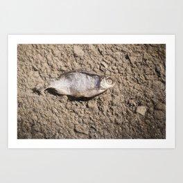 Dead Dried Fish Art Print