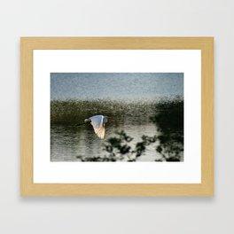 Great Egret in Flight Framed Art Print
