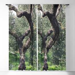 Old Olive Tree Mediterranean Grove Blackout Curtain