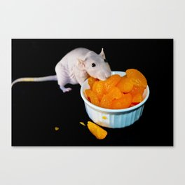 Perla the hairless rat Canvas Print