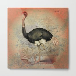 The Ostrich Metal Print
