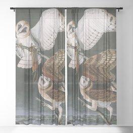 Barn Owls, the Birds of America by John James Audubon Sheer Curtain