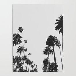 Palm Spring California, Palms Poster