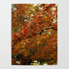 The Glow Of Autumn Poster