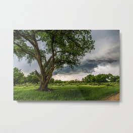 Big Tree - Tall Cottonwood and Passing Storm in Texas Metal Print