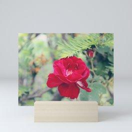 Red Semi-Plena Rose Mini Art Print