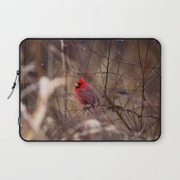 Cardinal - Bright Red Male Bird Rests in Raindrops Laptop Sleeve