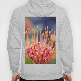 Tropical Sunburst - Leucospermum Pincushion Protea Flower Hoody