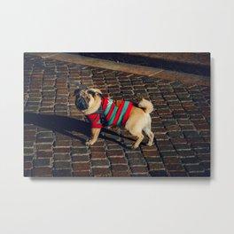 Dog by Francesco Ungaro Metal Print