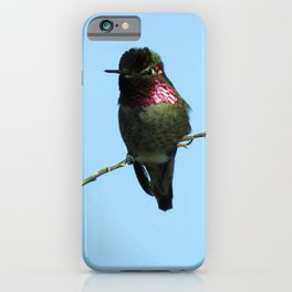 Male Anna's Hummingbird iPhone Case
