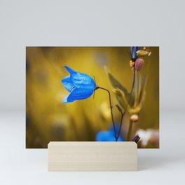 Round Leaved Bellflower Campanula Mini Art Print