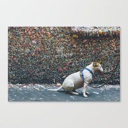 Bubble Gum Dog Canvas Print