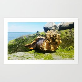 Whelks by the Bay Art Print