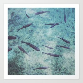 Fishes 2 Art Print