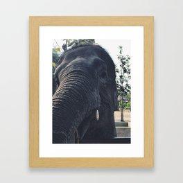 Smiling Framed Art Print