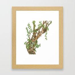 Twisting woods Framed Art Print