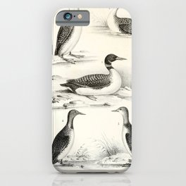 029 Great Northern Diver colymbus glacialis Arctic Loon colymbus arcticus Red Throated Diver colymbus septentrionalis6 iPhone Case