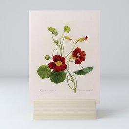 Nasturtium Tropaeolum Majus Mini Art Print