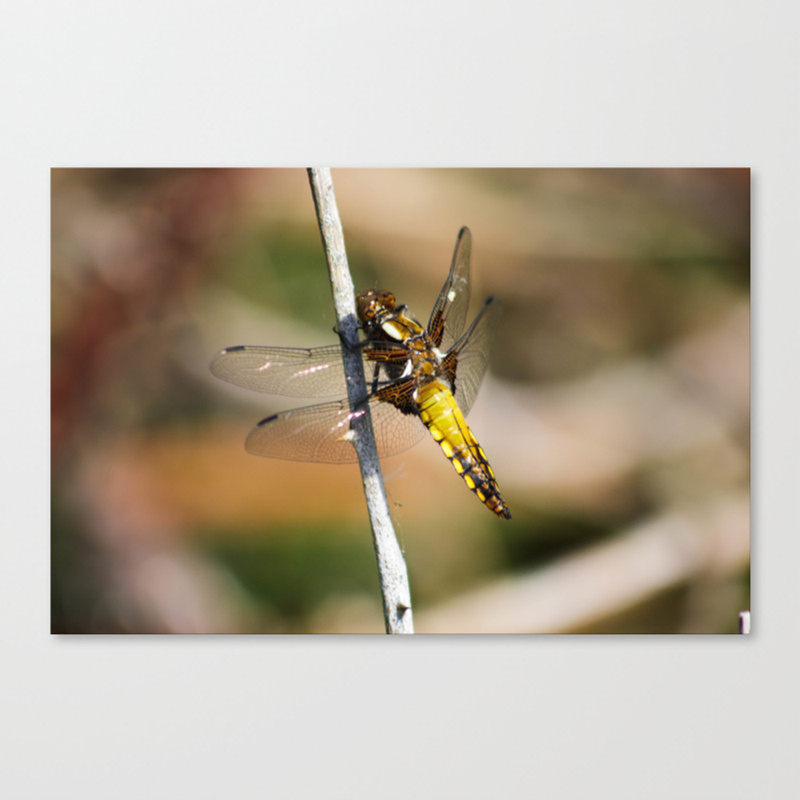 Yellow Dragonfly Canvas Print by Gemmalfknight CNV8677110