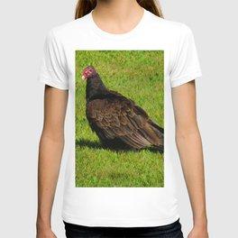 Buzzard T-shirt