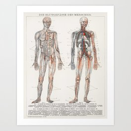 Die Blutgefasse Des Menschen (1898), an antique lithograph of the human blood vessels and cardiovasc Art Print