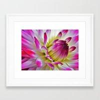 dahlia Framed Art Prints featuring Dahlia by Astrid Ewing
