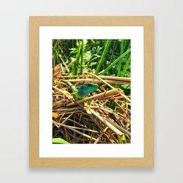 curious lizard Framed Art Print