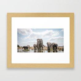 Drinking Elephant herd Framed Art Print