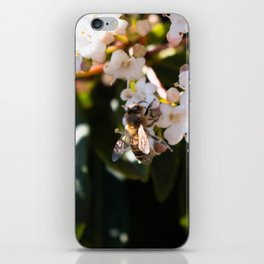 Bee in Late Winter (2 of 2) iPhone Skin