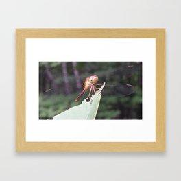Chillin 2 Framed Art Print