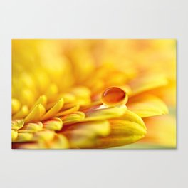 Sunshine Drop Canvas Print