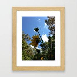 SwampSunflower Framed Art Print