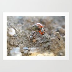 Back To The Anthill Art Print
