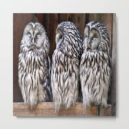 Owl Trilogy Metal Print
