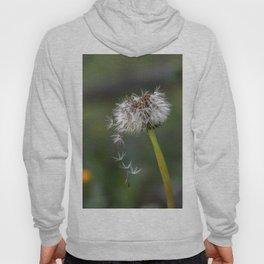 Colourful dandelion Hoody