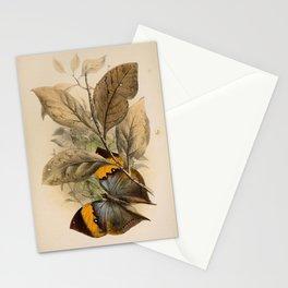 Frank Evers Beddard - Animal Coloration (1892) - Plate II: Kallima (Oakleaf) Butterfly Stationery Cards